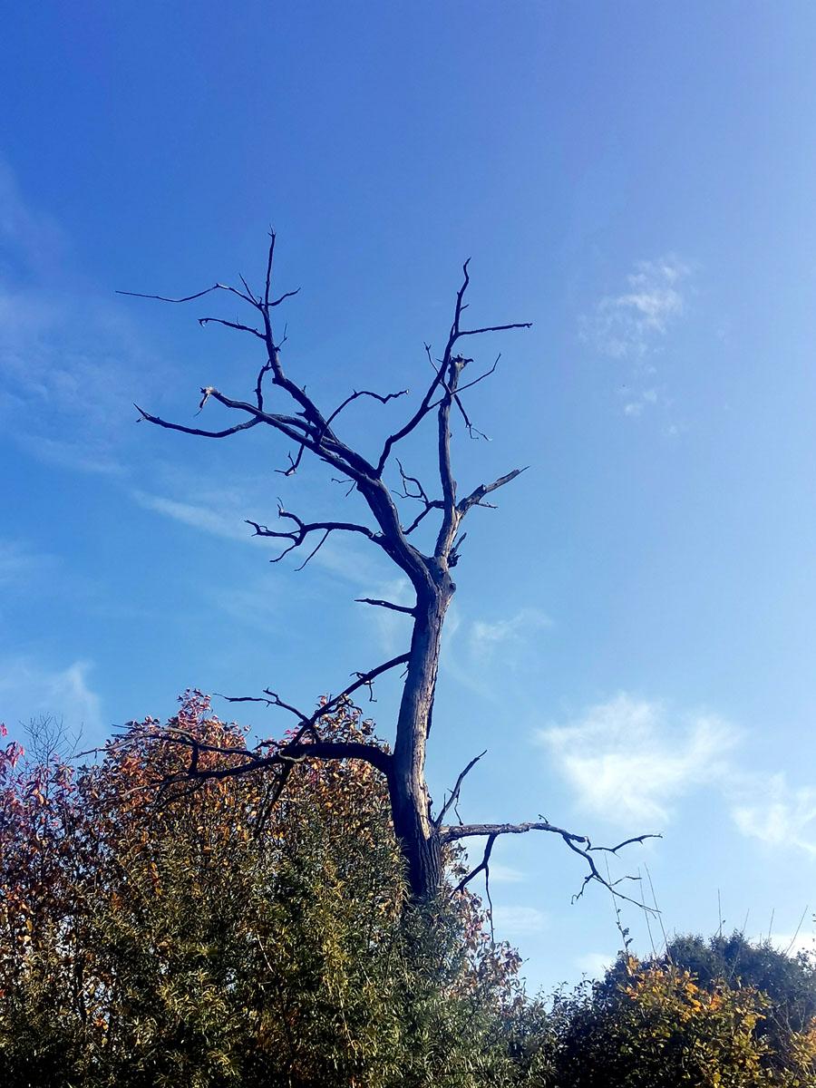 Рядом с платформой сначала увидели мертвое, но фотогеничное дерево на фоне голубого неба...