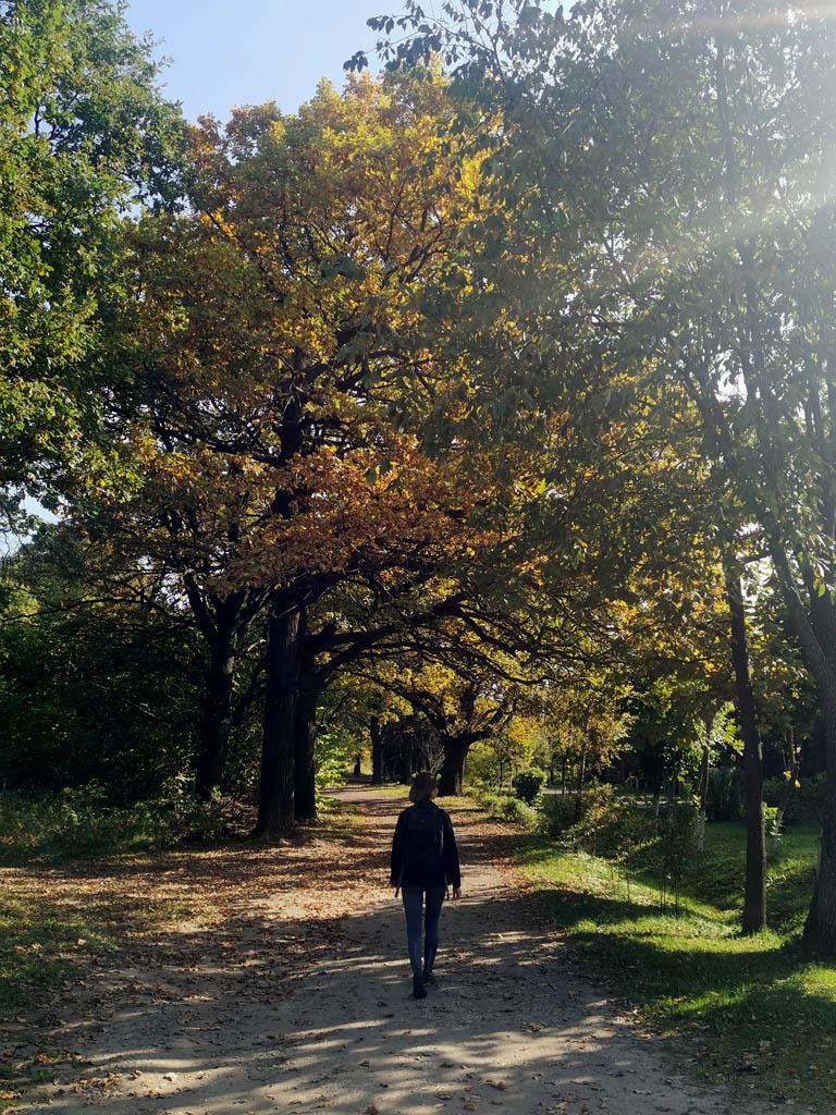 """А потом прогулялись по дубовой аллее по краю леса """"Дубки"""""""