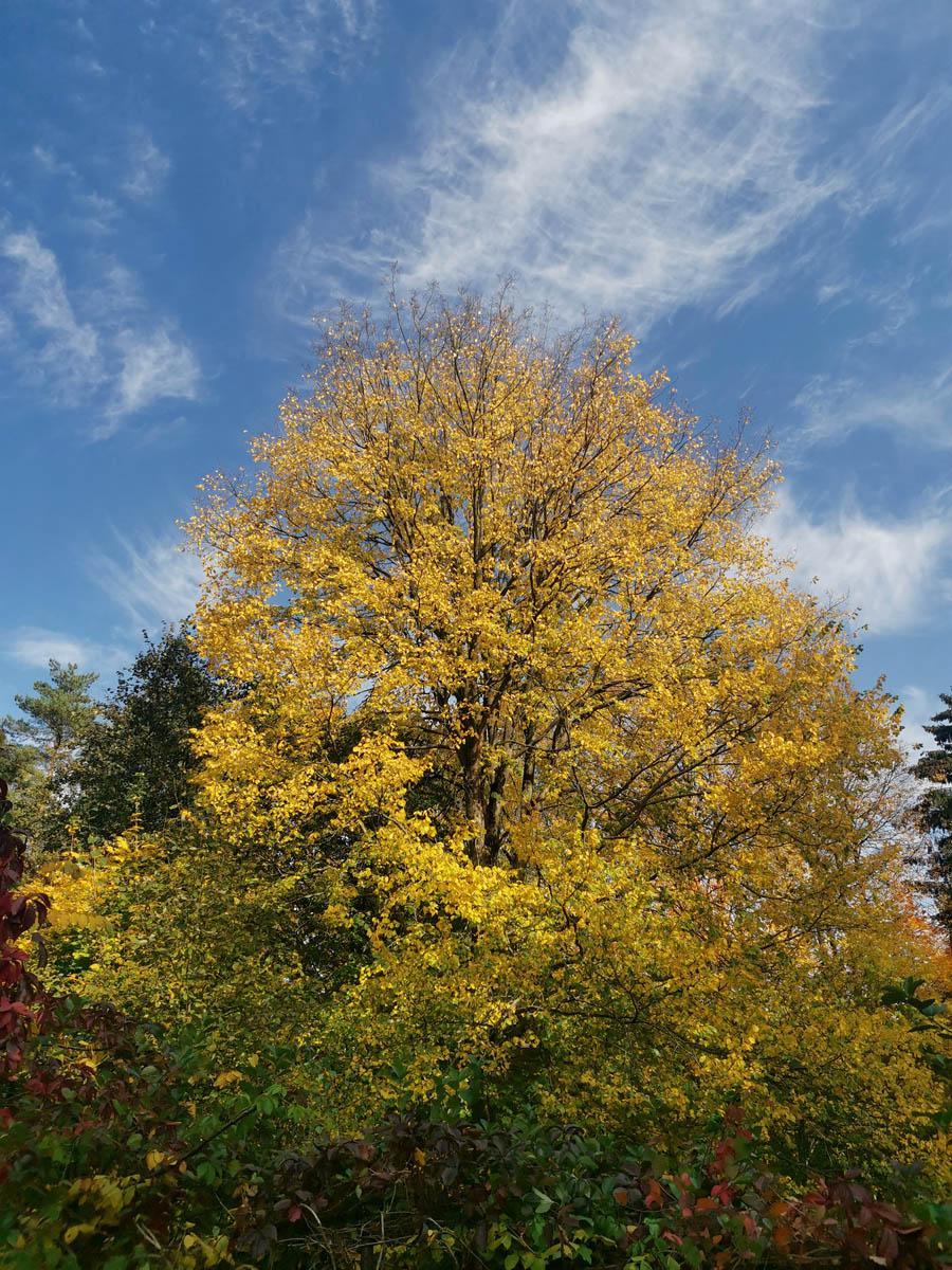 Красивые деревья в Белых Столбах....