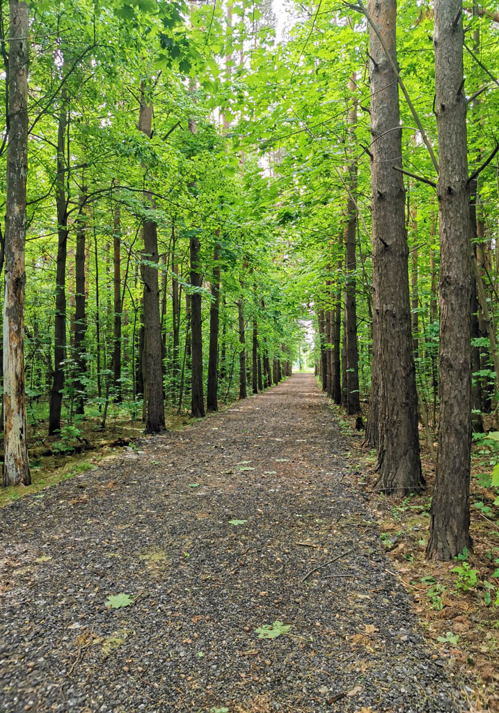 Мне до леса и идти далеко не надо. Живу на краю леса.
