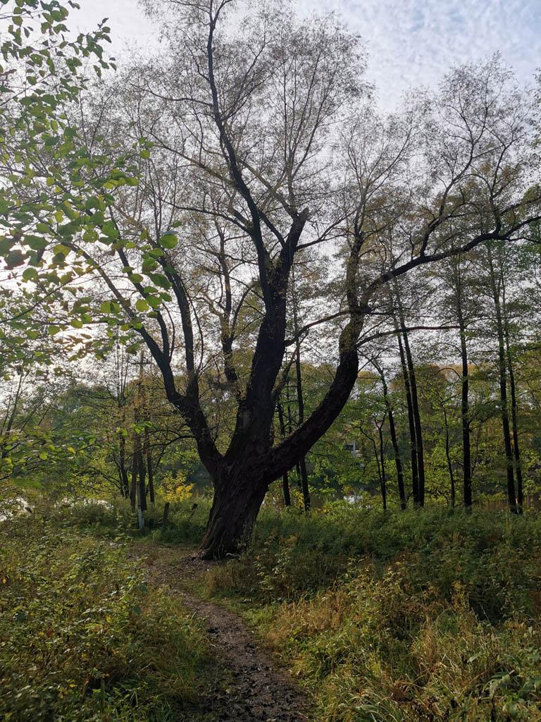 От беседки можно спуститься по крутой длинной лестнице к большому пруду. Создан с помощью плотины на реке Туровке в 1912–14 гг.