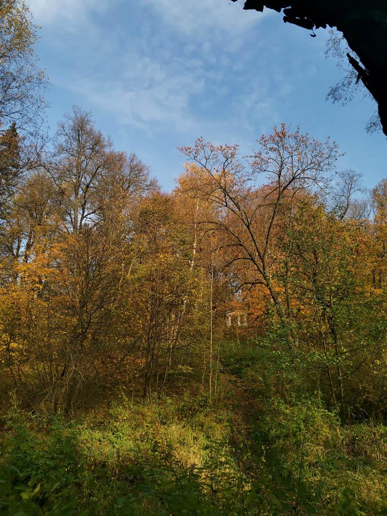 Под опавшей листвой лестница почти не видна. Ротонда тоже почти спряталась за кронами деревьев...
