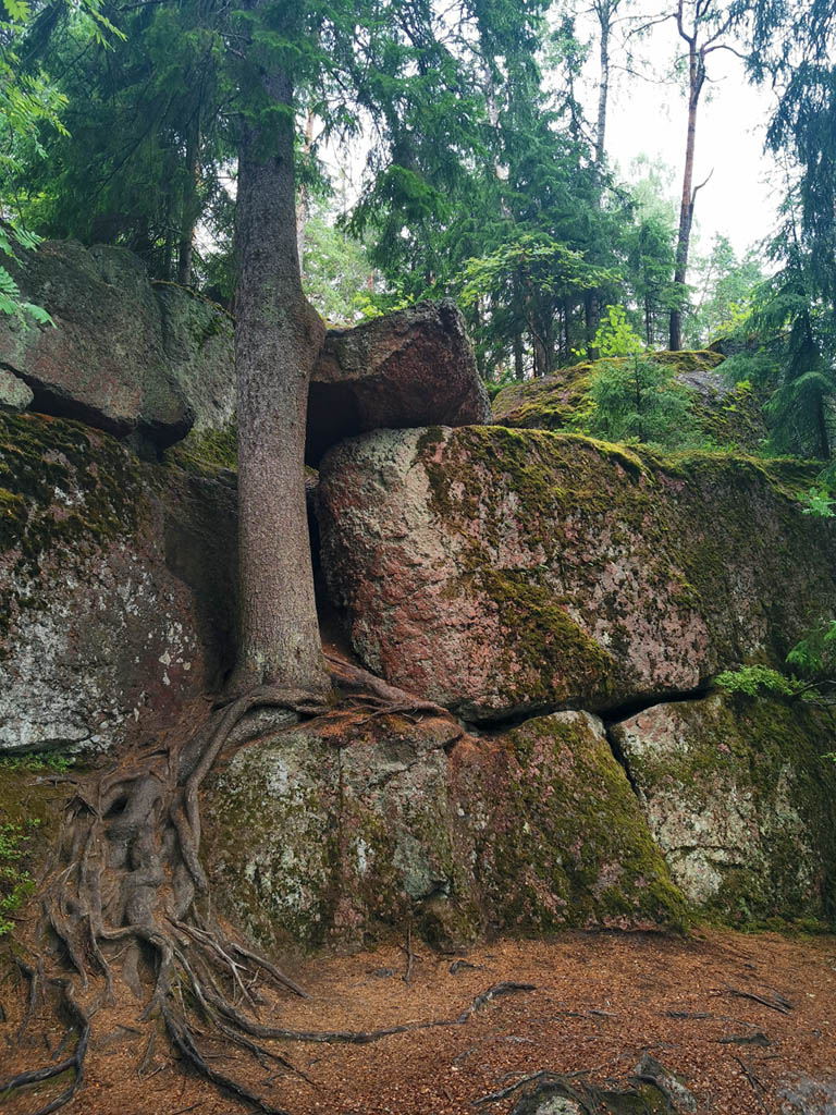 Выборг. Монрепо (фр. Mon Repos — «мой покой», «моё отдохновение») — скальный пейзажный парк на берегу Выборгского залива — Государственный историко-архитектурный и природный музей-заповедник «Парк Монрепо».