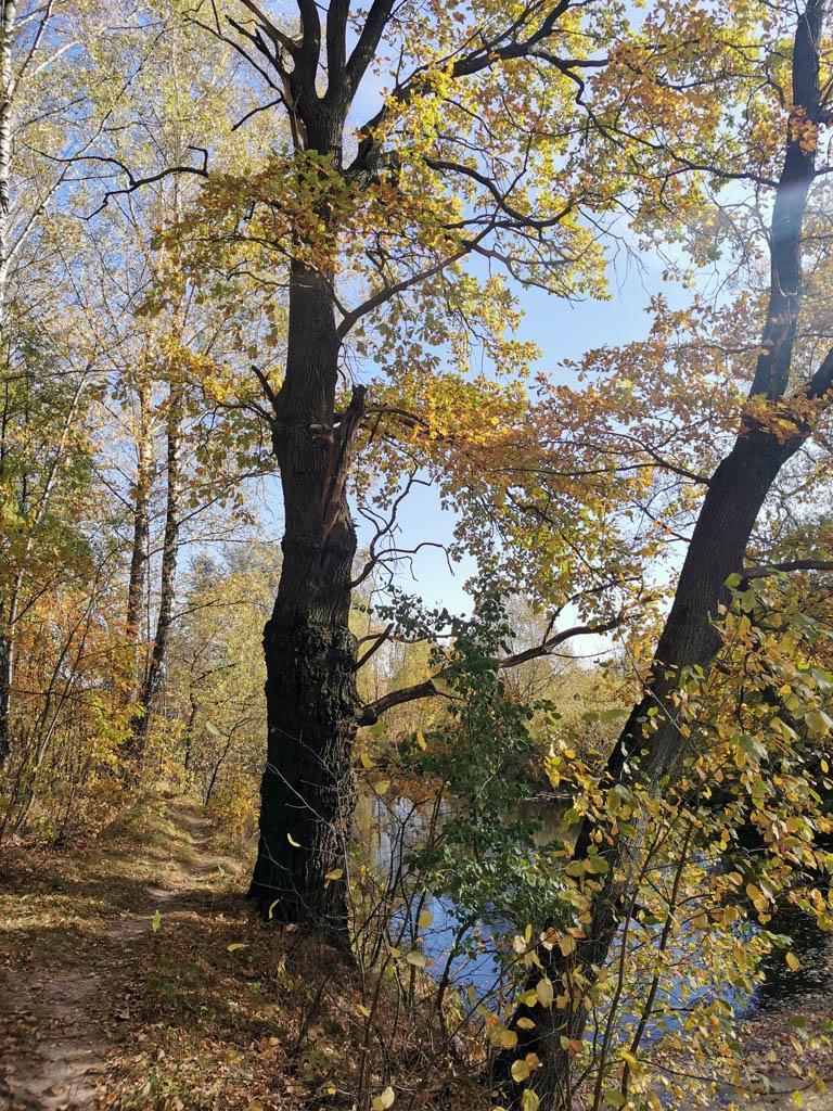 Небольшой лесок и пруд в деревне Шахово.