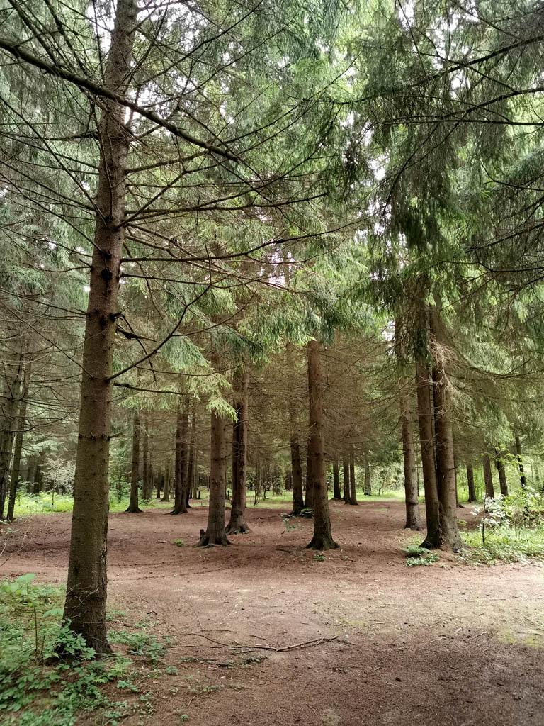 Как приятно прогуляться по лесу...