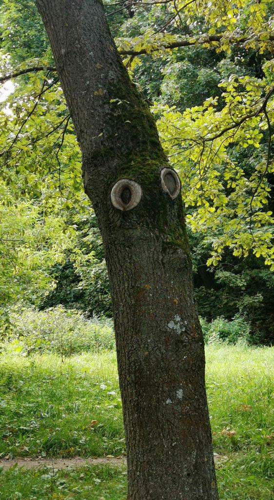 Недовольное дерево.