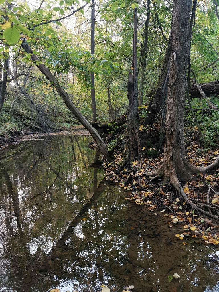 Река Бунчиха.
