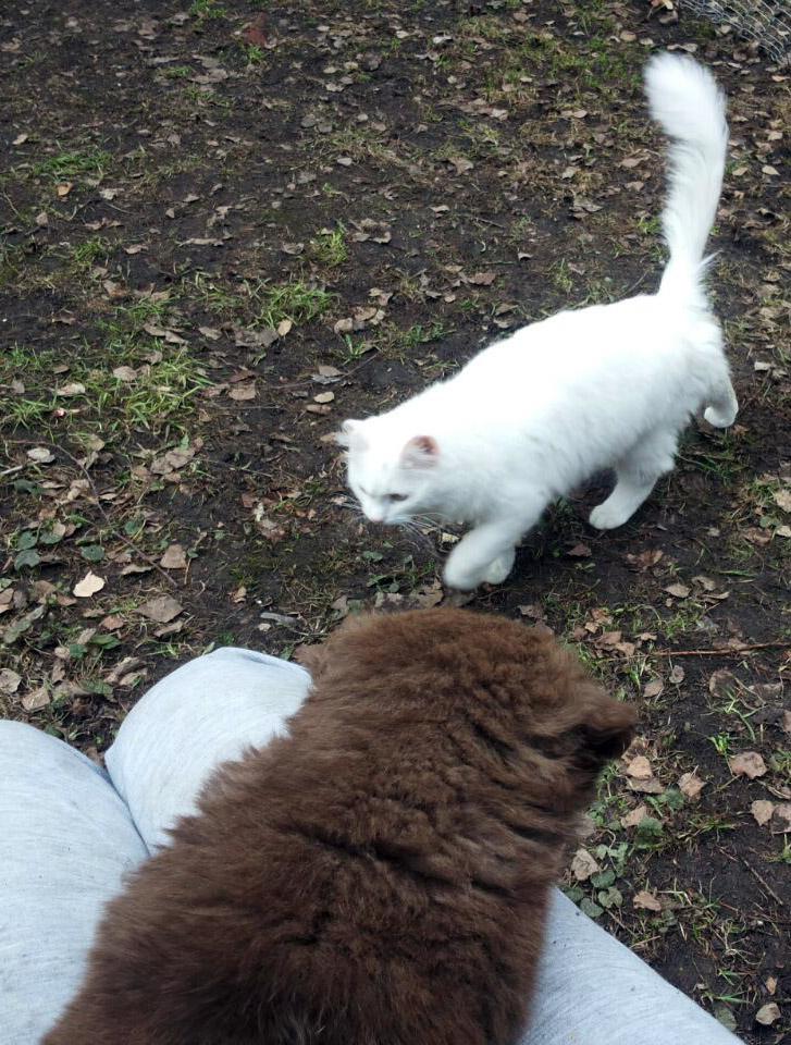 Кот решил посмотреть, кого это привезли...
