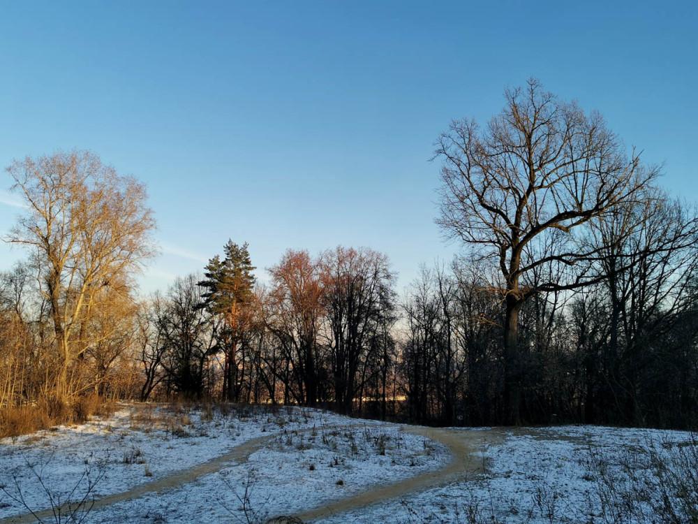 Огромные деревья Суворовского парка.