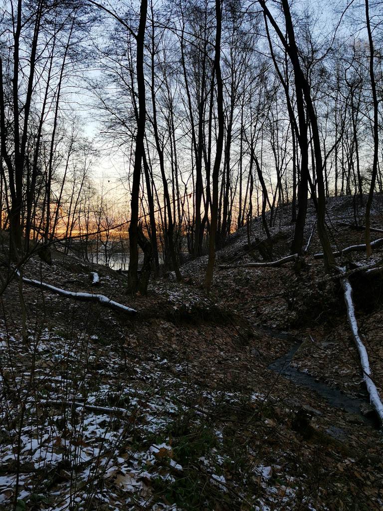 За деревьями виднеется освещенная солнцем Москва, а здесь тень.