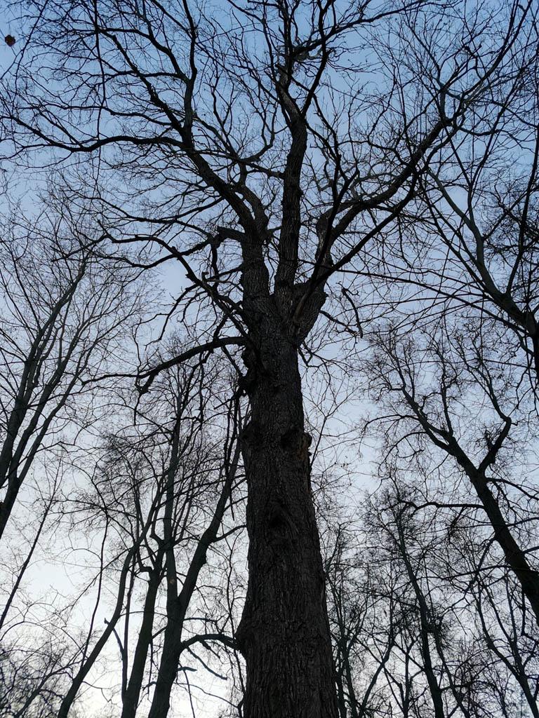 На склонах и вершине вековые деревья...