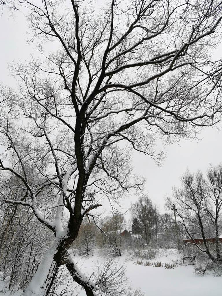 Черные деревья, серое небо и белый снег.... Стильненько...