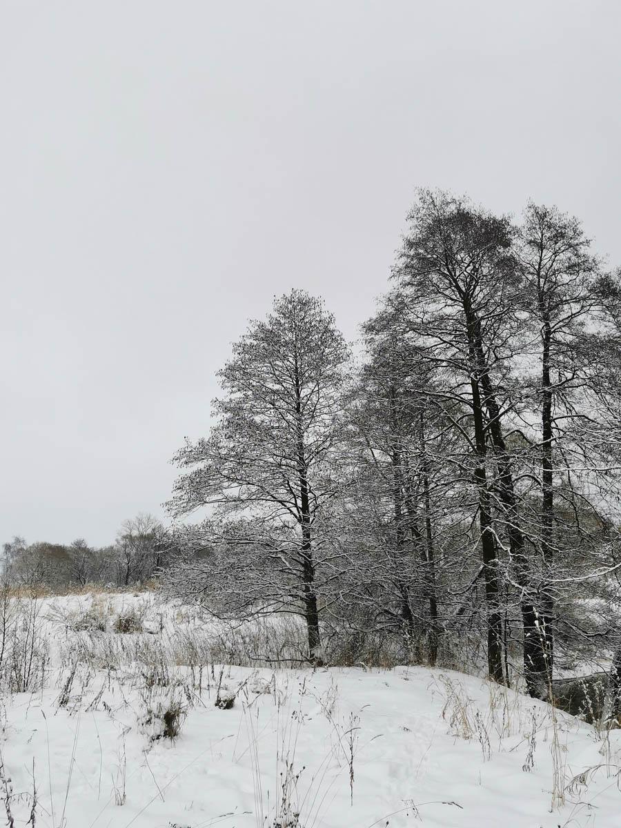 Снова идем вдоль поля и любуемся красивыми деревьями...