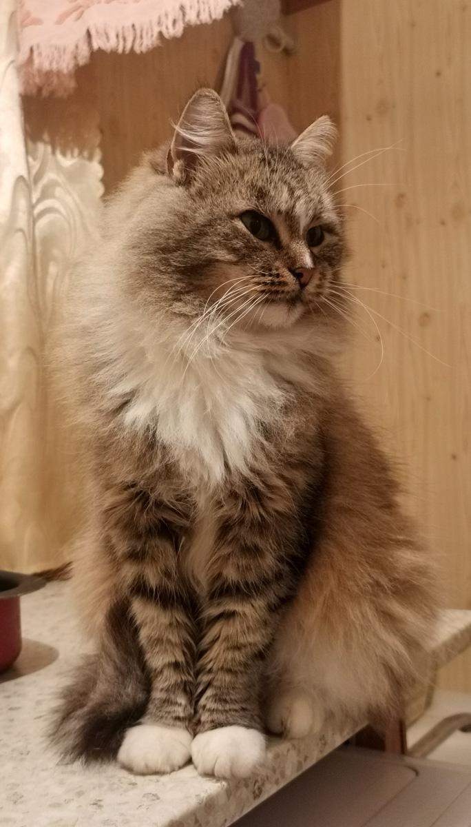 Королева-мать. Родоначальница всей нашей многочисленной кошачьей стаи..