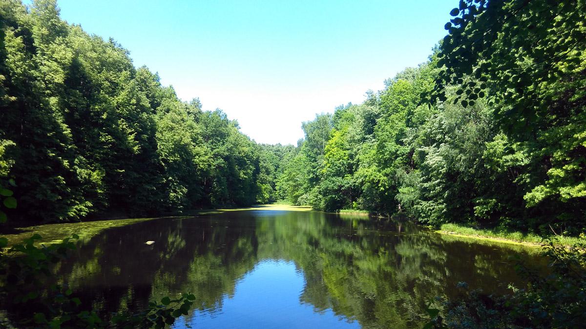 """Восточный пруд усадьбы, в народе """"Черное озеро"""". Мой любимый водоем Усадьбы. Красота и покой. Если бы, еще не злющие комары по его берегам...."""