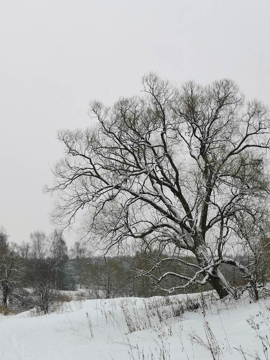 Красивое дерево на берегу реки Рожайка