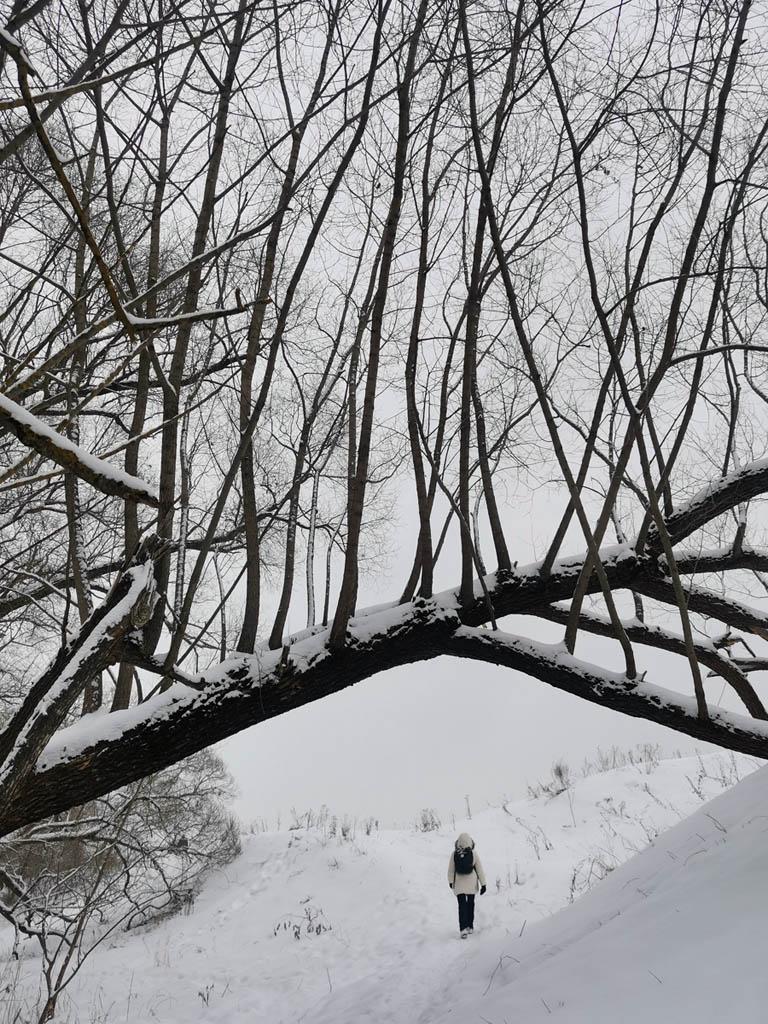Деревья вдоль Рожайки...