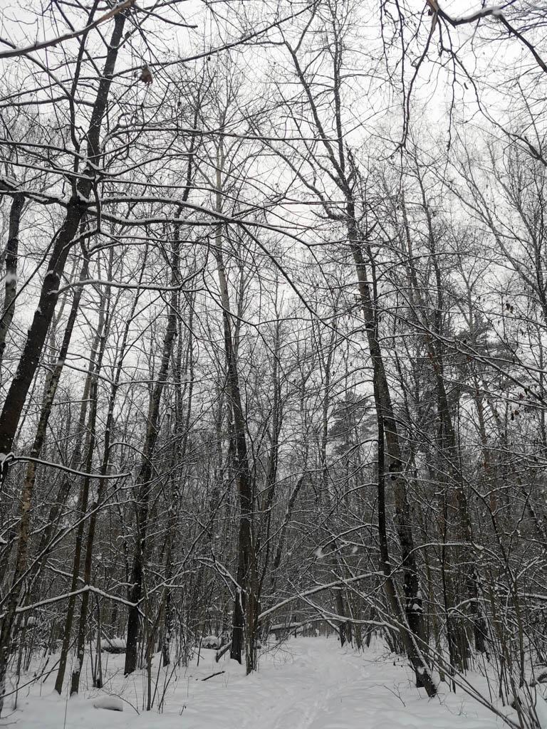 Тропа через лес, расположенный между трассой М-4 Дон и рекой.