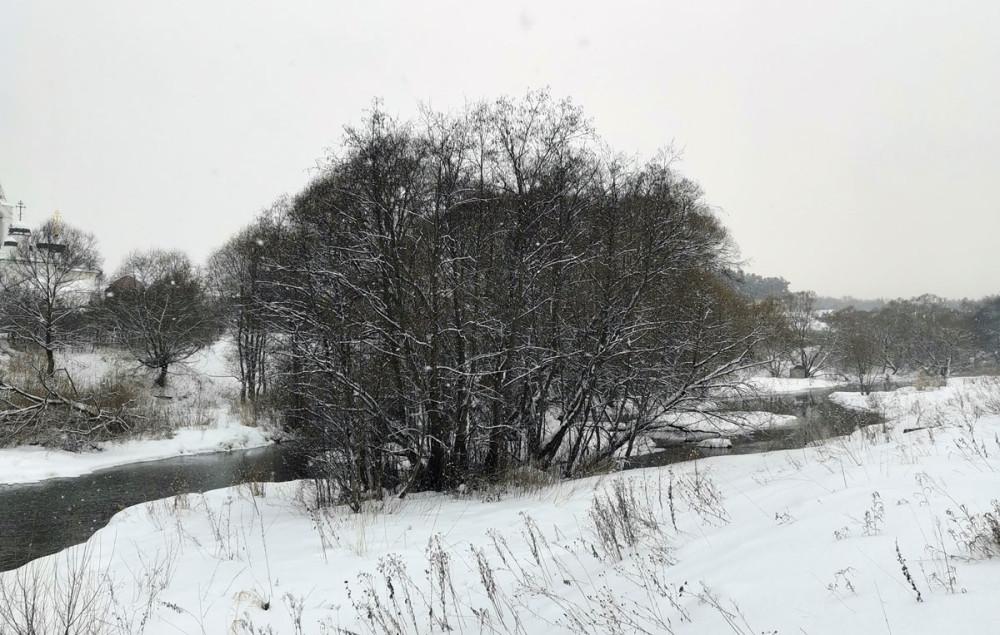 Деревья на берегах Рожайки...