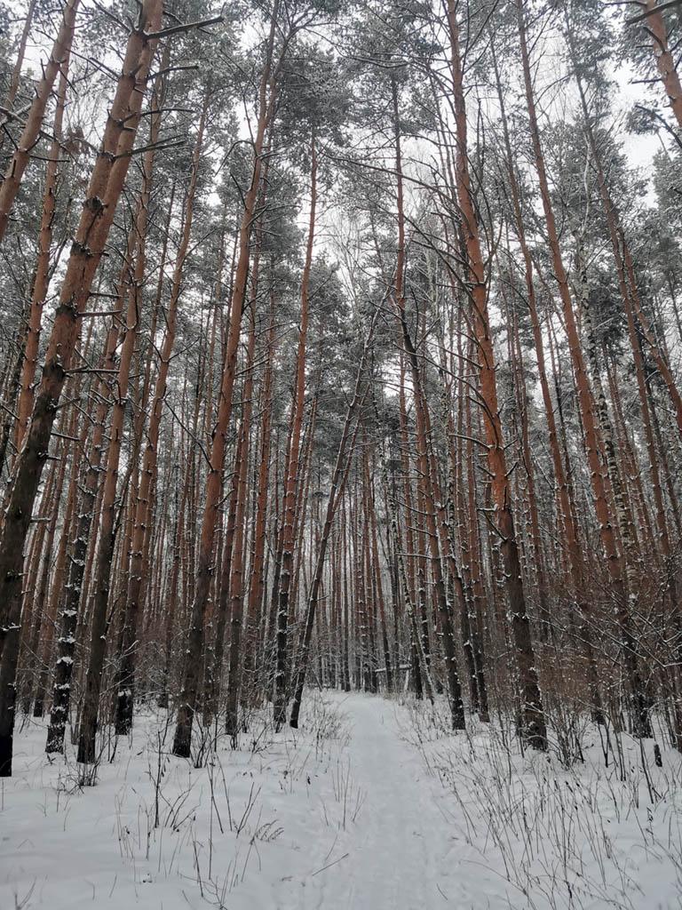 Ушмарский лес.