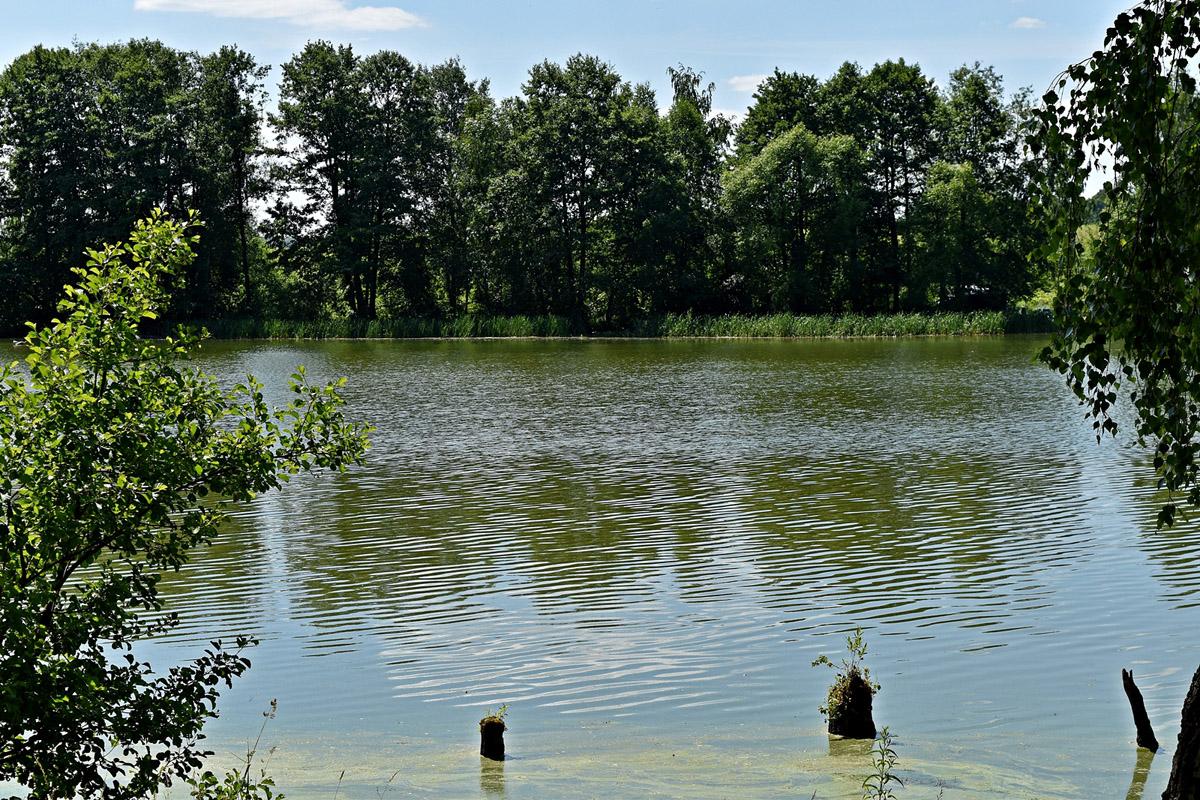 В жаркий июньский день после прогулки по полю вдоль леса особенно приятно выйти к берегу большого водоема...