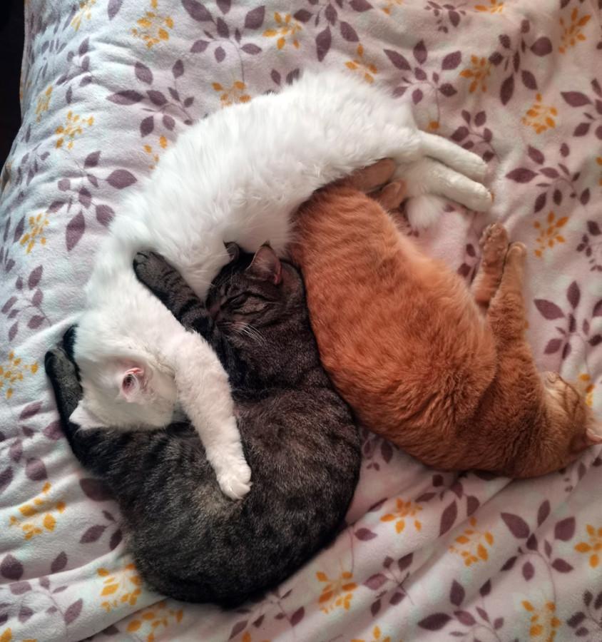 А котики предпочитают переждать морозы дома...