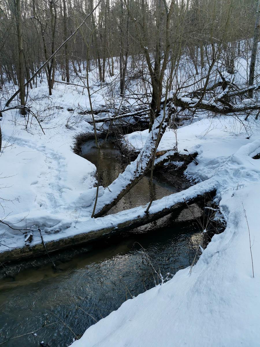Много раз проходя вдоль Рожайки, видел впадающий в реку ручей. В этот раз впервые иду вдоль этого ручья. Кстати, по этому упавшему дереву будет удобно перейти на другой берег.
