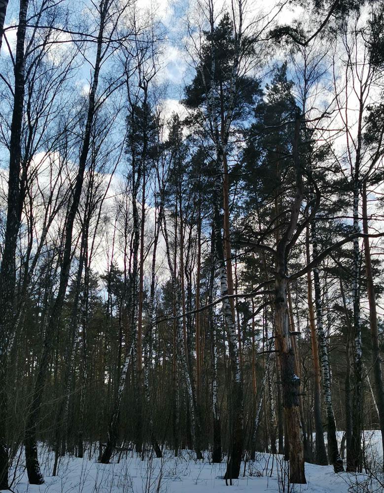 Снова идем через лес. Наша цель в очередной раз попытаться попасть в женский монастырь...