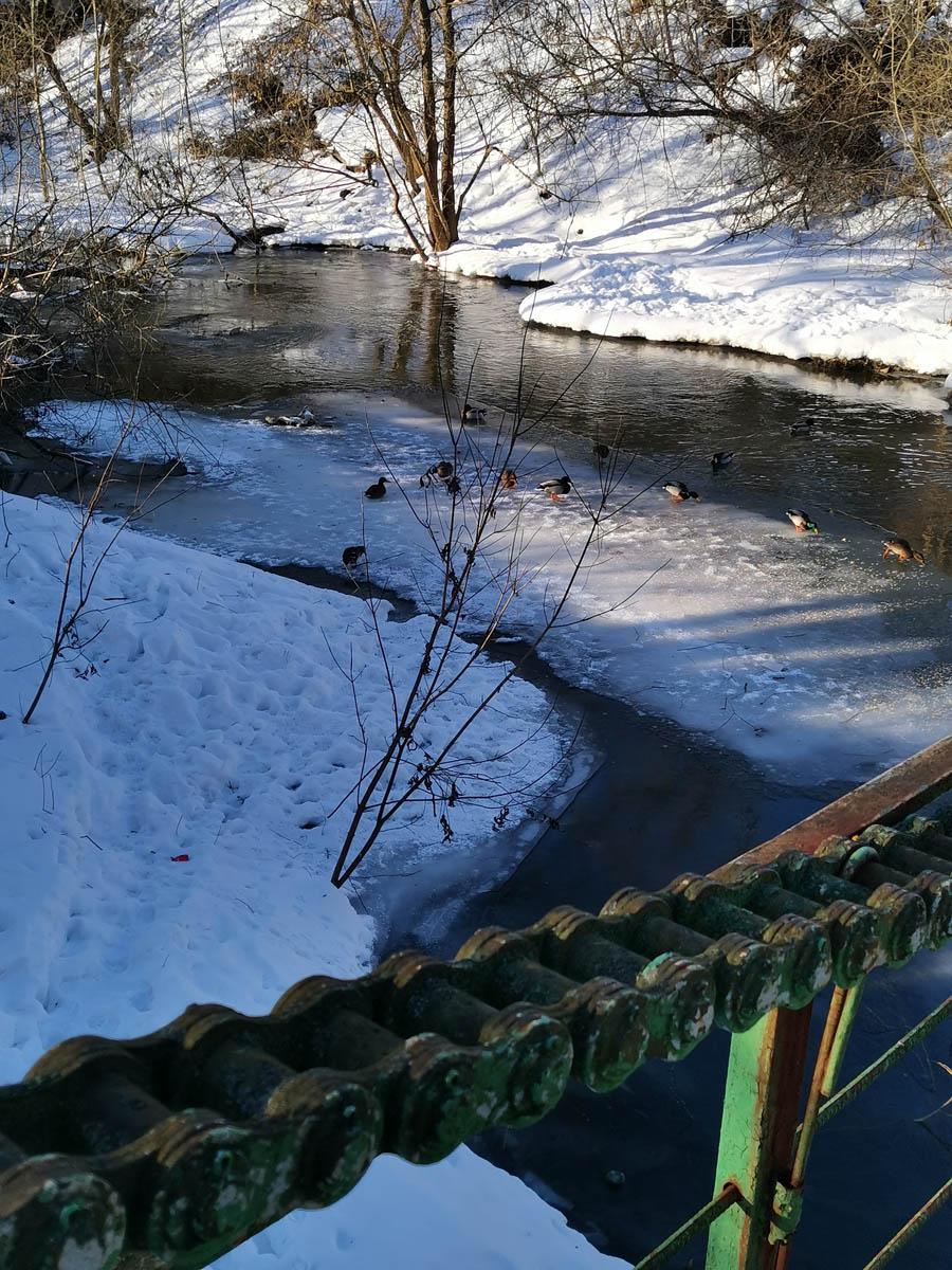 Звенья цепи и уточки на льдине.