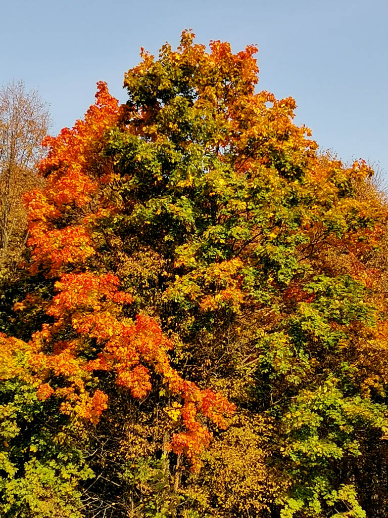 Осенняя красота на окраине Куртино...