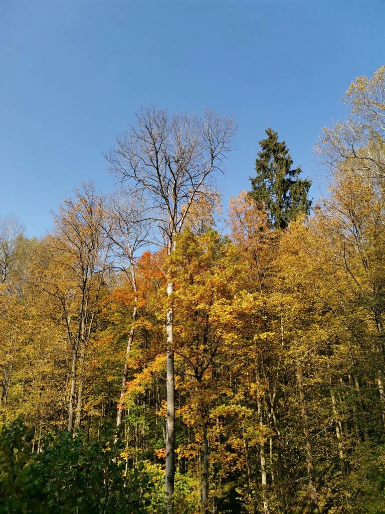В районе деревни и СНТ Песочня сходим с дороги в лес...