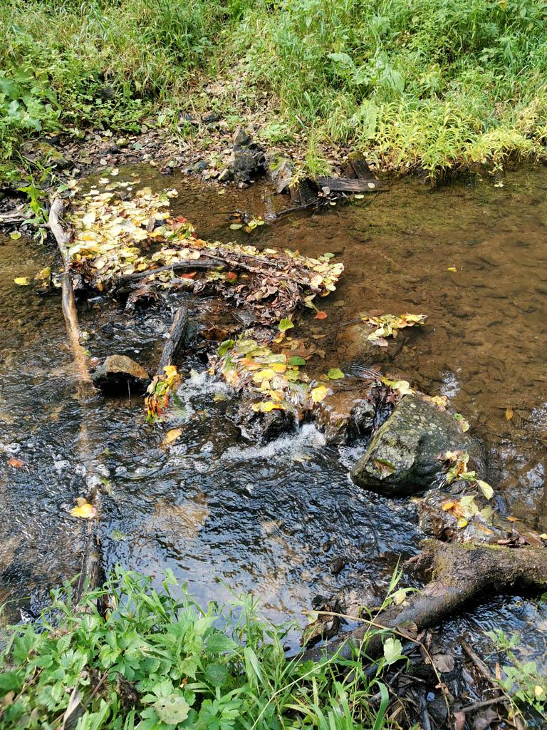 Поскольку шли во второй половине сентября, в воде плавало множество опавших листьев. На камнях они скапливались и образовывали запруды...