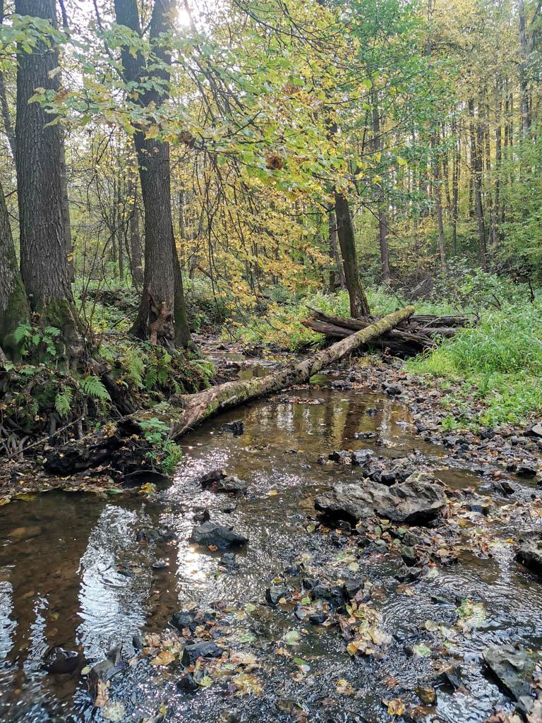Много поваленных деревьев лежало поперек русла.