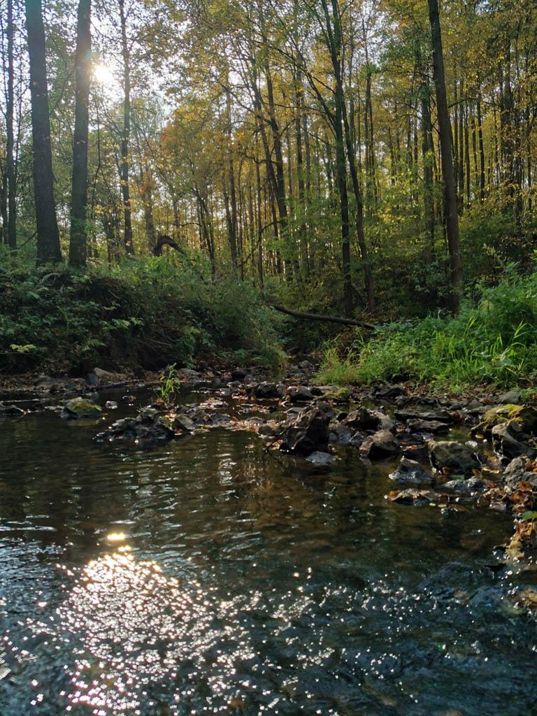Солнце пробивается сквозь кроны деревьев отражаясь в реке