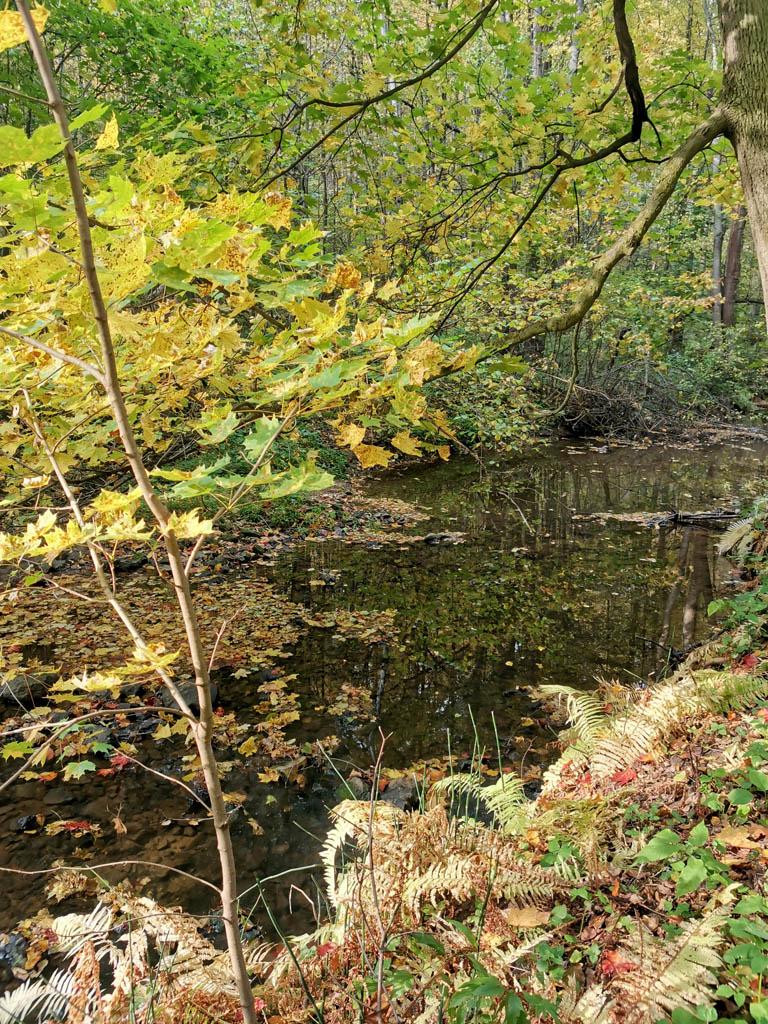 На этом участке река глубже и приходится идти по берегу.