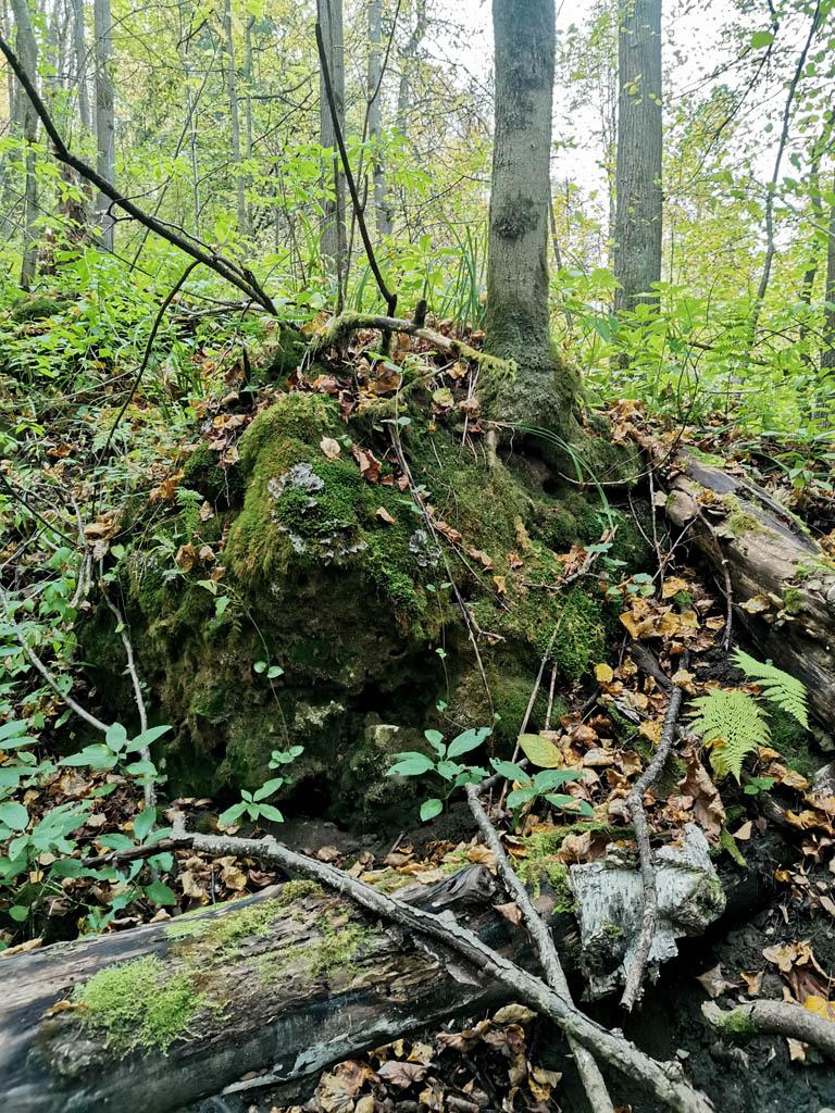Множество больших камней заросших мхом. На некоторых растут деревья.