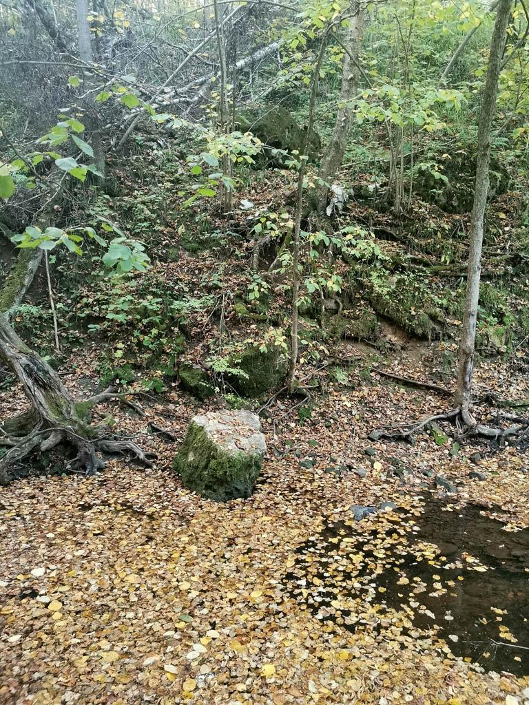 Река, камни, бурелом...