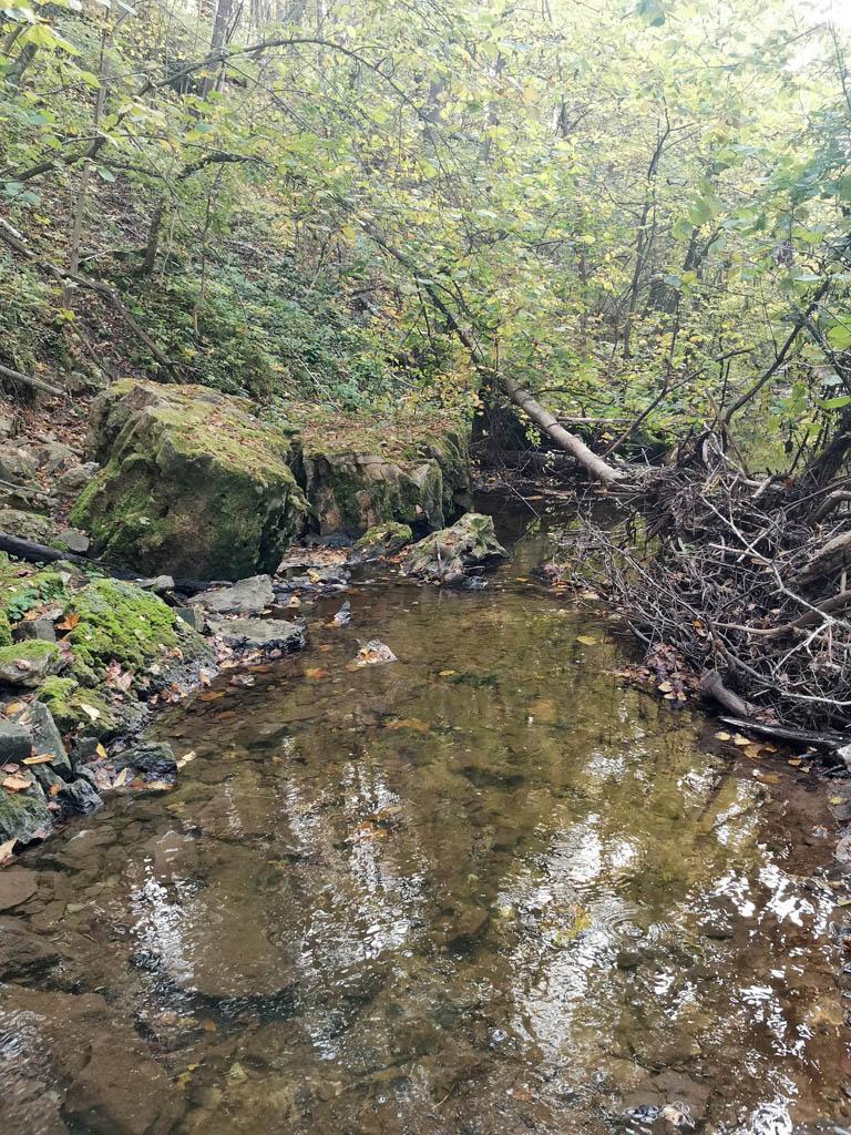 Слева 20-метровый крутой склон, а впереди огромные камни и завалы из деревьев.
