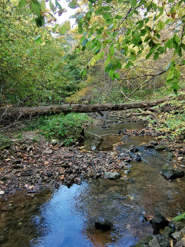 Вы уже обратили внимание, что речка небольшая и довольно спокойная. Но весной после таяния снега или после сильного дождя она превращается в настоящую мощную горную реку и сметает все на своем пути...