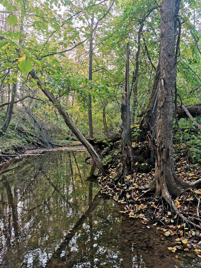 Обнаженные корни деревьев... Устоят ли они весной под напором бурной реки...