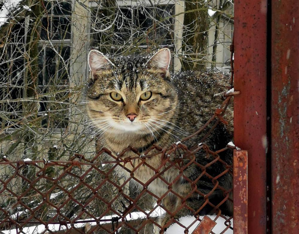 Просто, чей-то матерый котище на заборе. Как пройти мимо такого красавца!