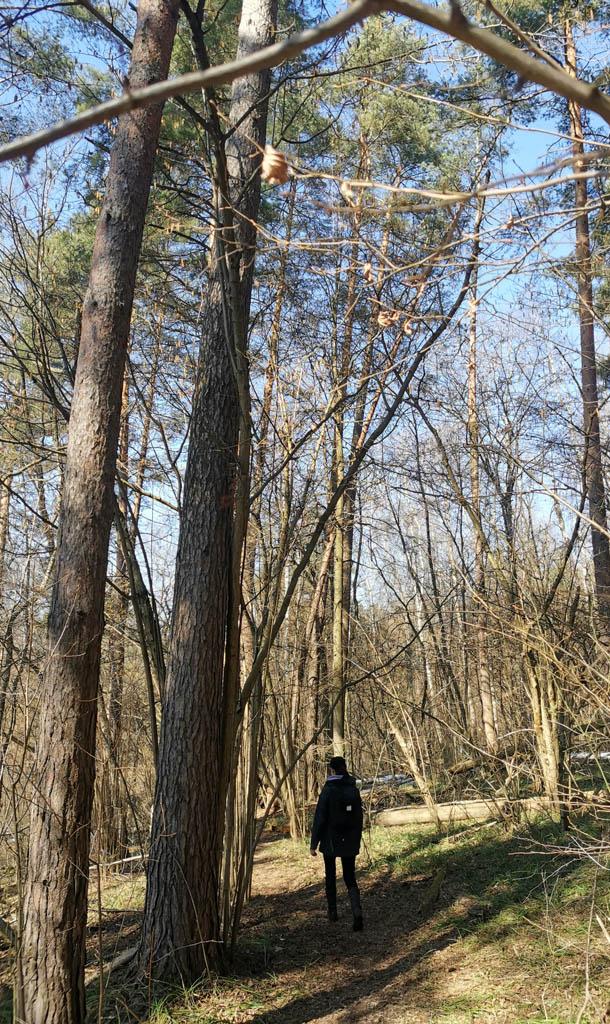 После удачного посещения спортивного магазина идем через лес между трассой М-4 и Рожайкой.