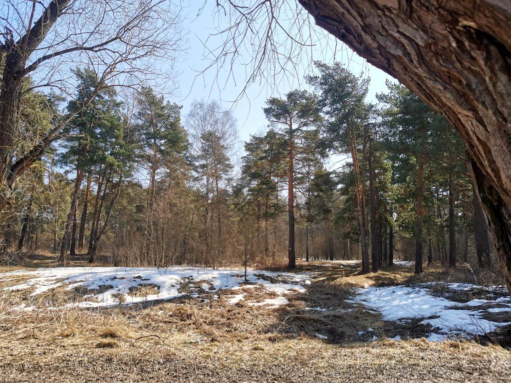 Лес на правом берегу реки.