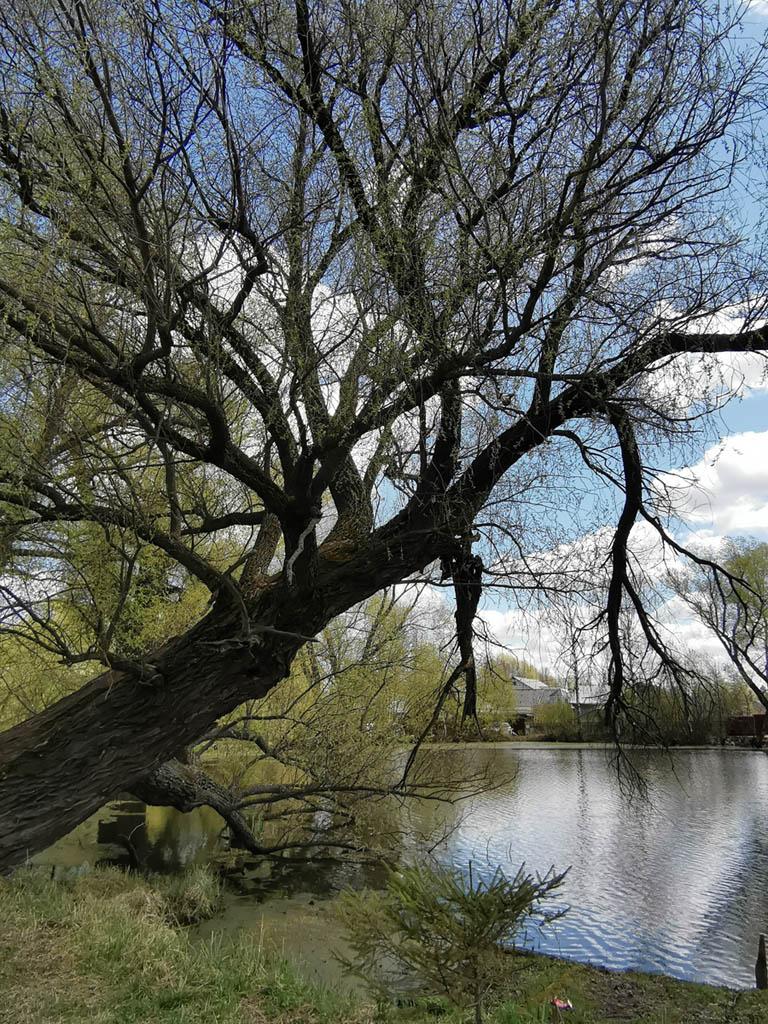 На его берегах самые большие деревья...