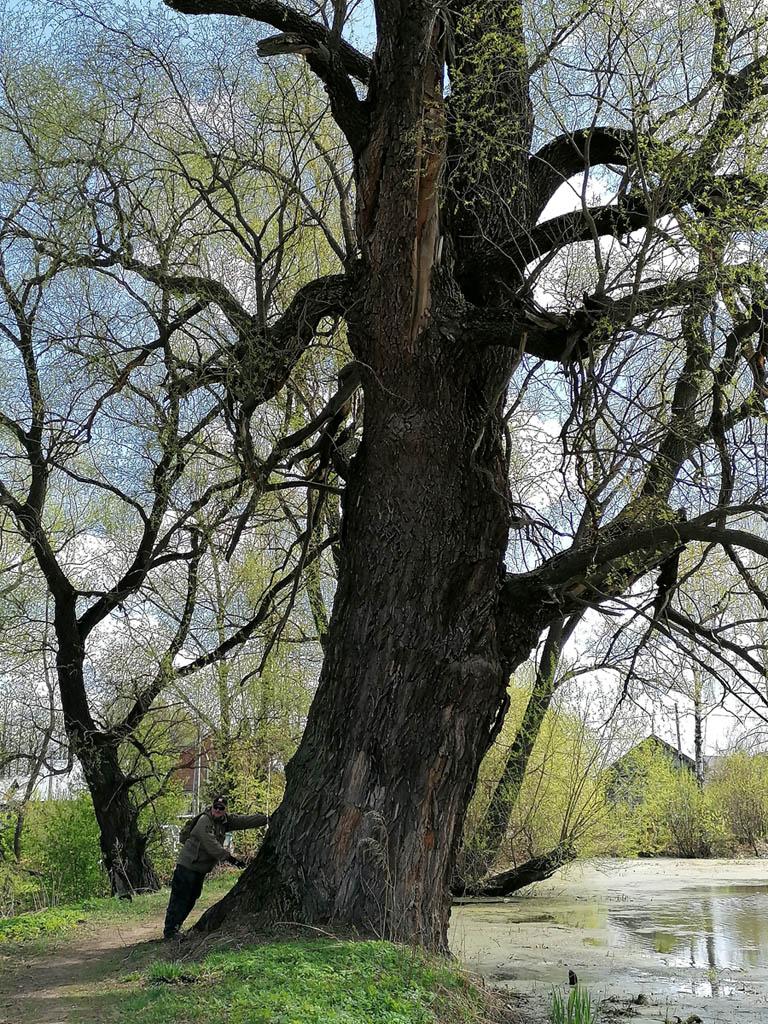 А это дерево, просто, огромное!
