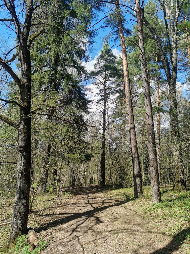 Но не руинами едиными... Идем через лес около Гальчино.