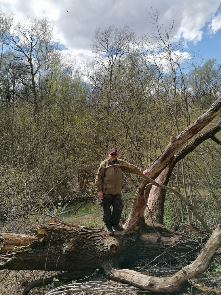 Я застал это дерево еще не упавшим...