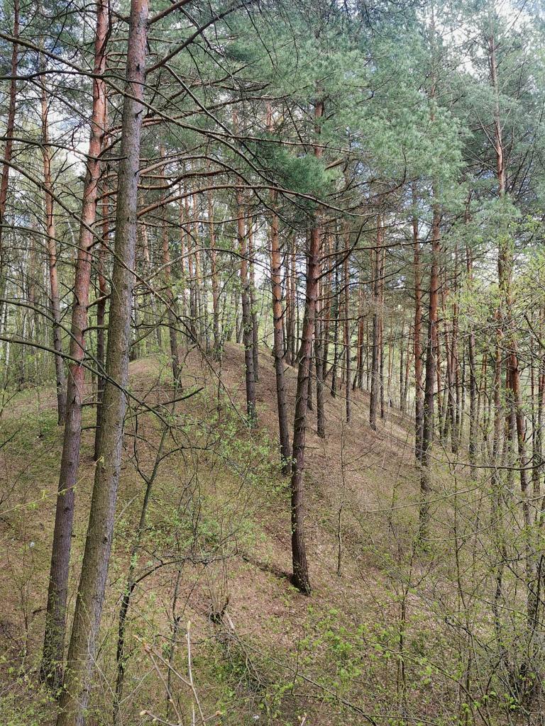 Склоны заброшенного песчаного карьера в лесу.