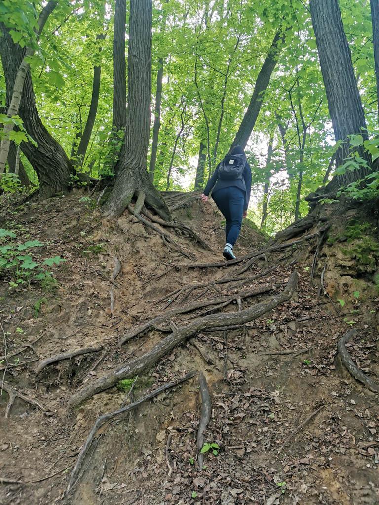 Оголенные корни и крутой склон.