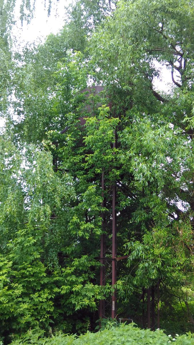 Среди деревьев притаилась ф=водонапорная башня. Ее мы заметили только из-за шума воды из открытого крана.